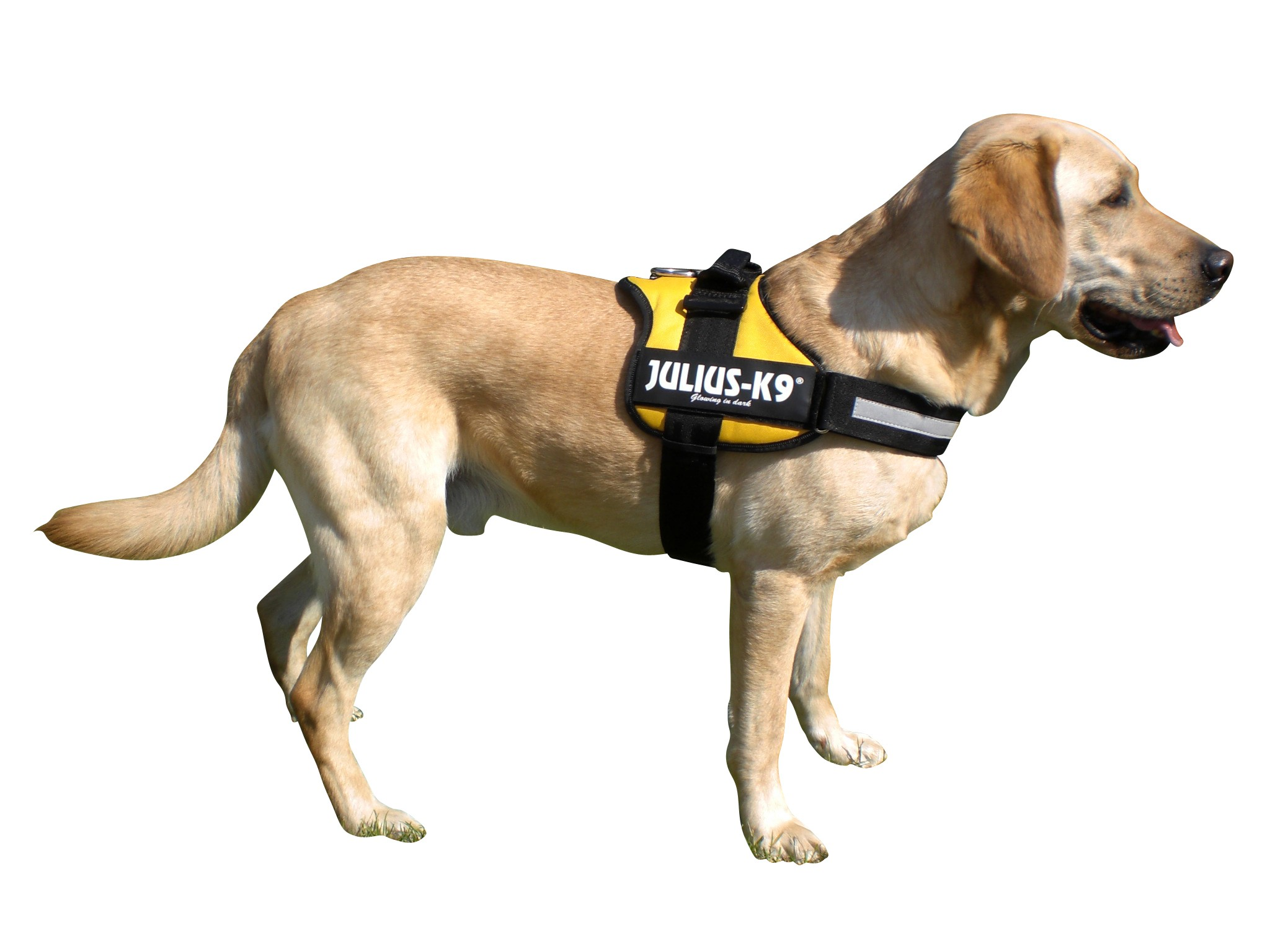 arnes deportivo perro
