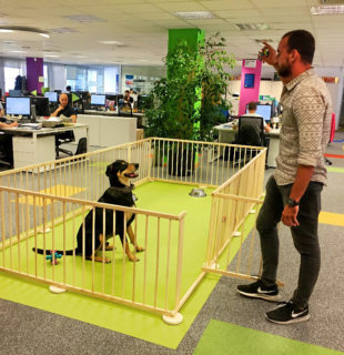 Mi mascota trabaja conmigo: Oficinas Dog Friendly